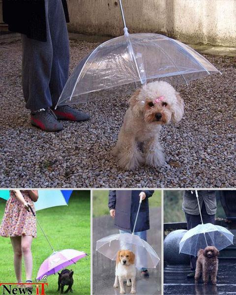 4. سگ چتر