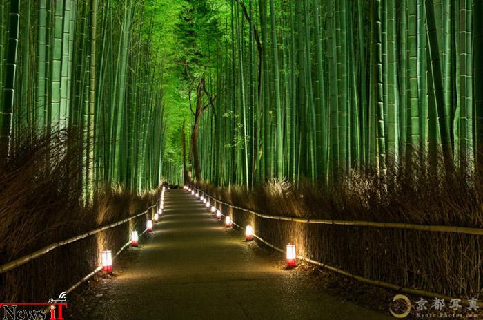 Top-10-Streets-Bamboo-Photo-by-Haruka-Suzuki