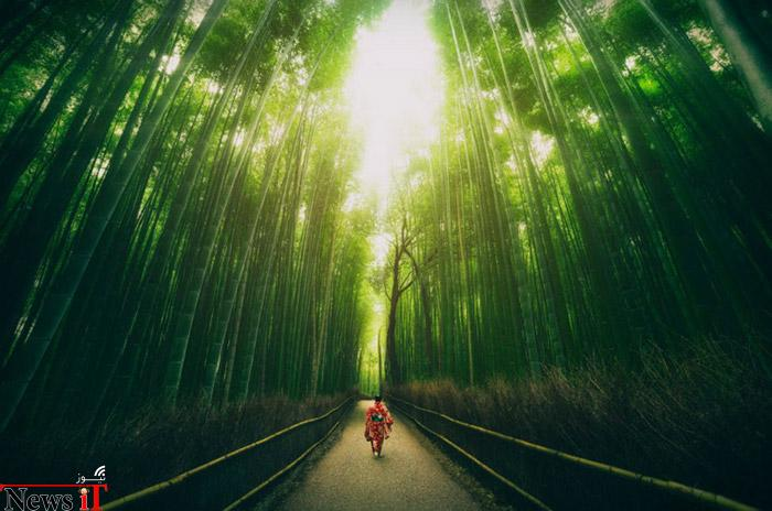 Top-10-Streets-Bamboo-Photo-by-peter-stewart-740x490