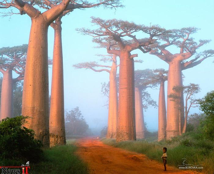 Top-10-Streets-Baobab-Photo-by-Radek-Borovka-740x601