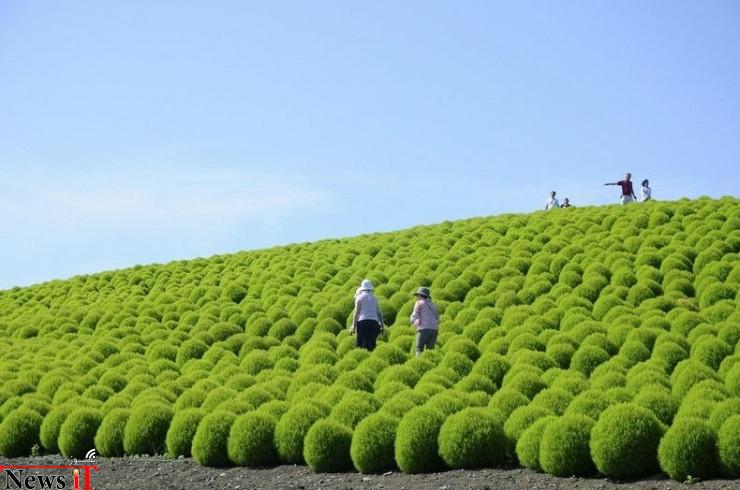 Hitachi Seaside Park, Hitachinaka, Japan